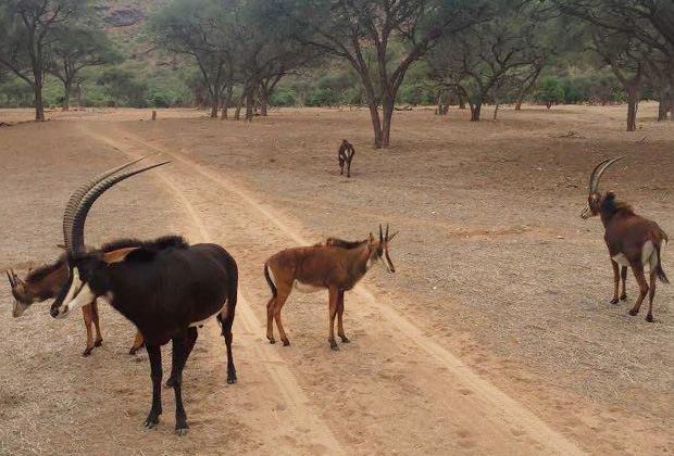 Животные Намибии
